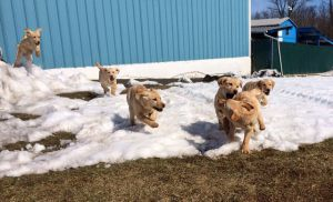 Photo Of Dogs Running Through Snow During Canine Training Class - Pro Canine Center