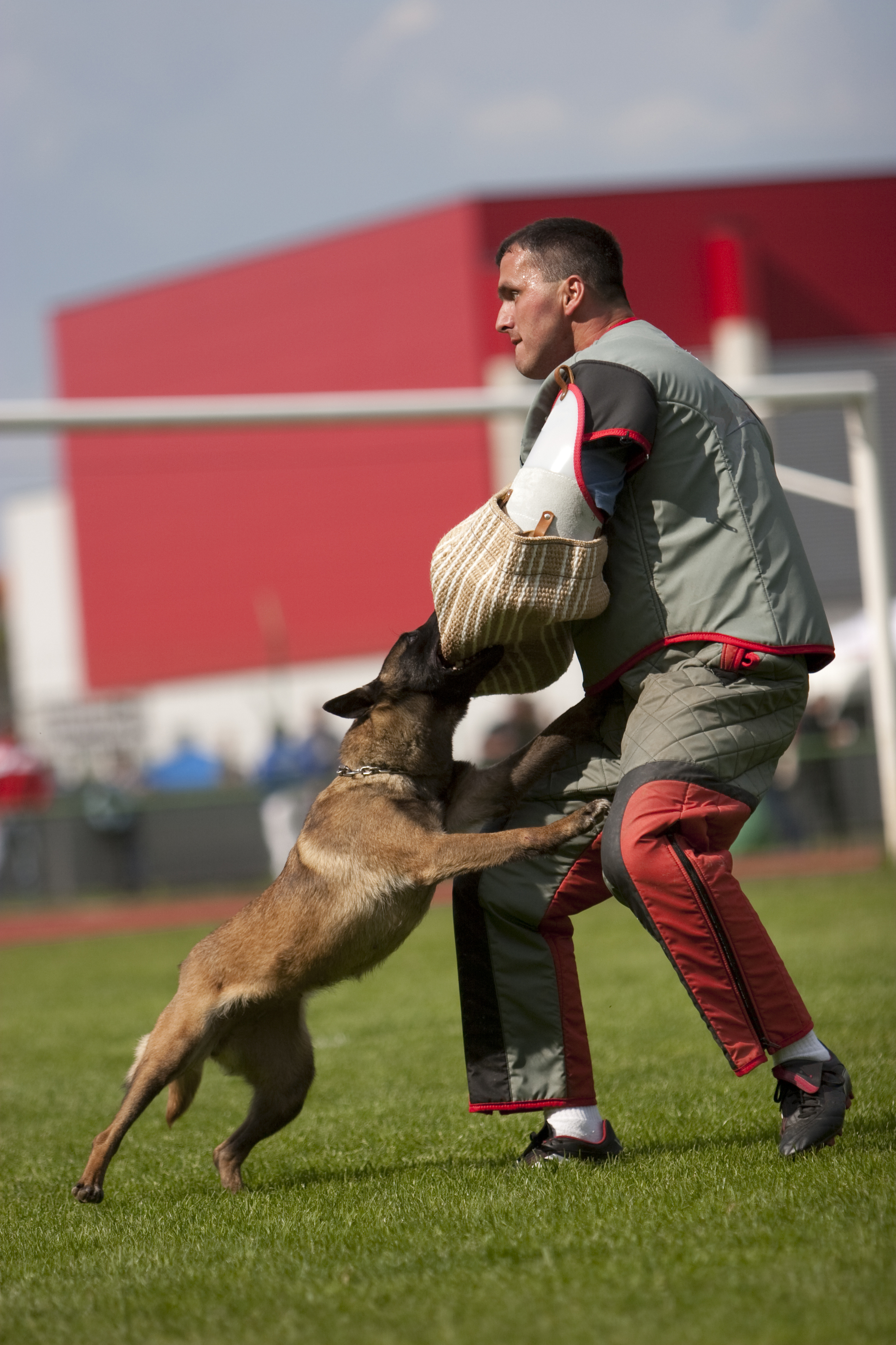 Protection Dog Training at Pro Canine Center