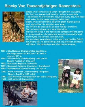 pet-training-academy05