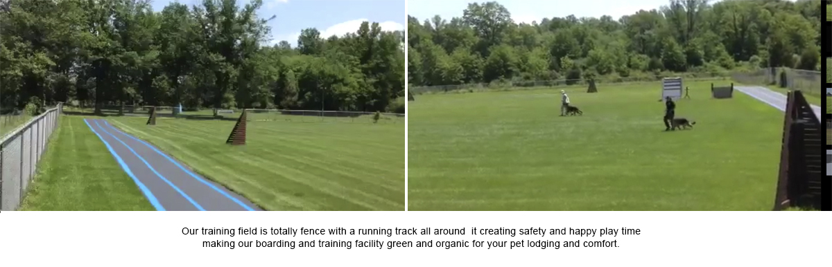 Dog Training Facility - Frenchtown, NJ - Pro Canine Center