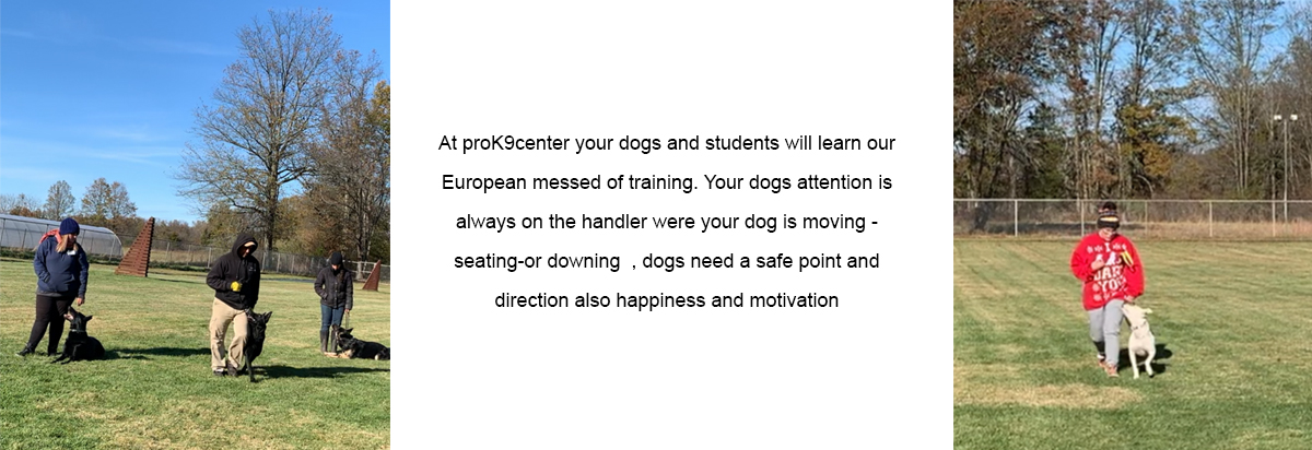 Students - Frenchtown, NJ - Pro Canine Center