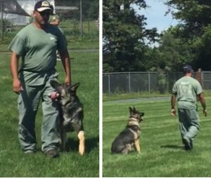 Master training course student and one of he's young dog approaching the first certification.