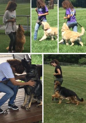 Our students and master trainer most have the knowledge consistency and the experience necessary in order to I chives this level of result developing happiness motivation and discipline producing a great obedience dog given our clients a well Traiend dog