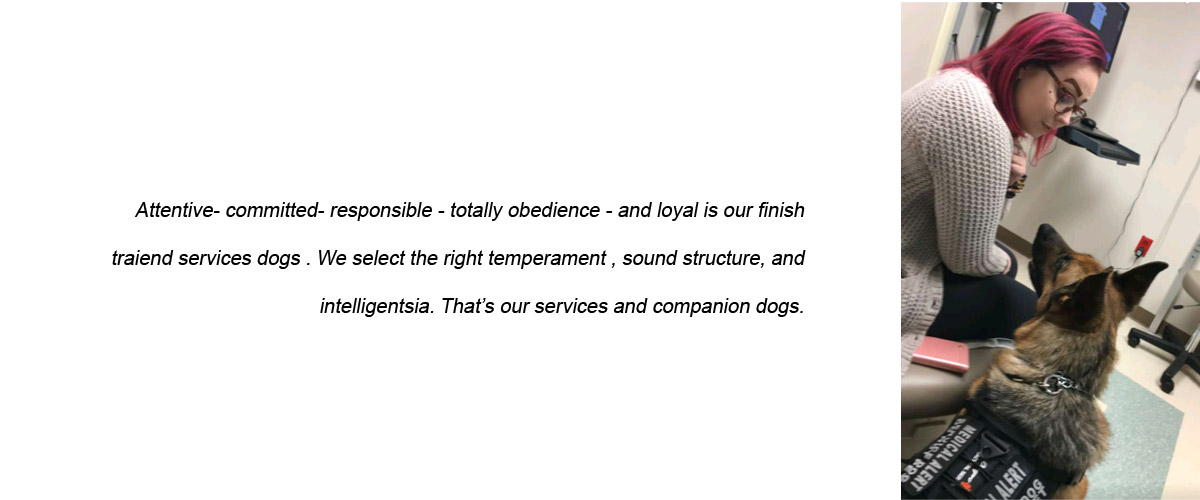 Dog - Frenchtown, NJ - Pro Canine Center
