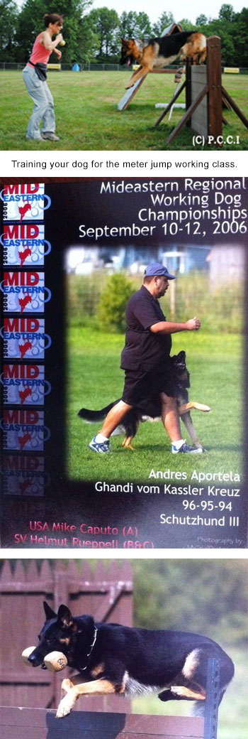 Training A Dog - Frenchtown, NJ - Pro Canine Center