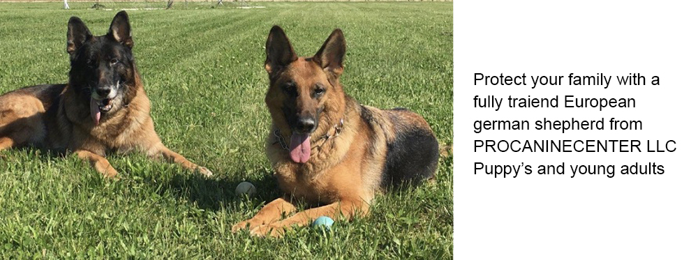 2 Protection Dogs - Frenchtown, NJ - Pro Canine Center