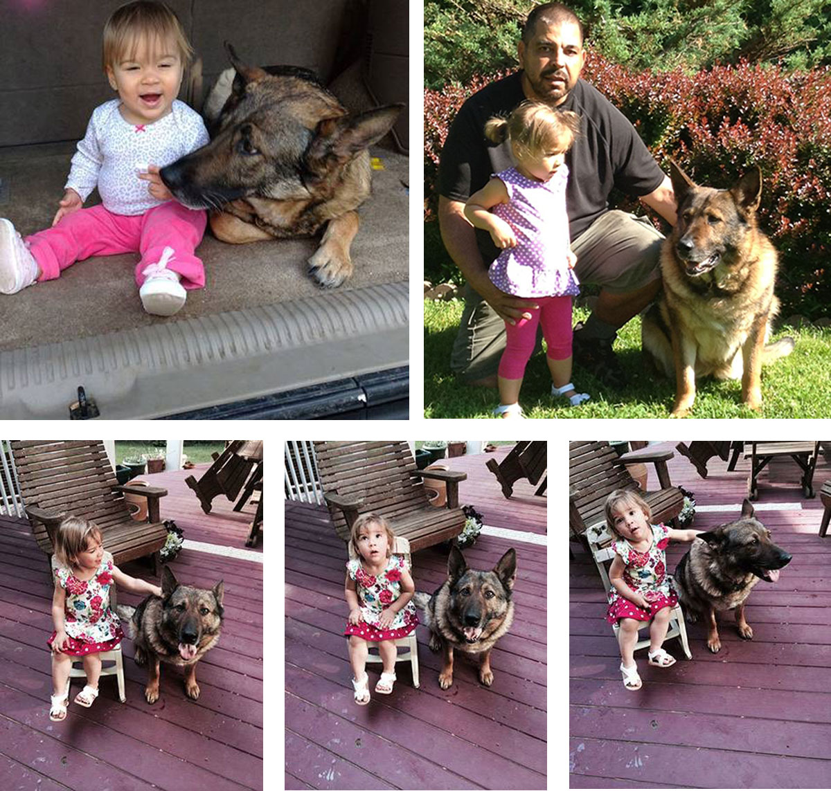 Protection Dog and Toddler - Frenchtown, NJ - Pro Canine Center