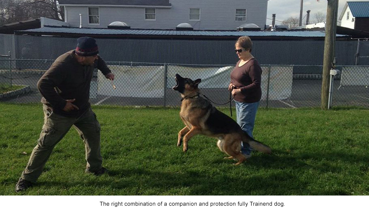 Andre Protection Dog Training - Frenchtown, NJ - Pro Canine Center